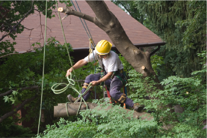 emergency tree removal orange county ca