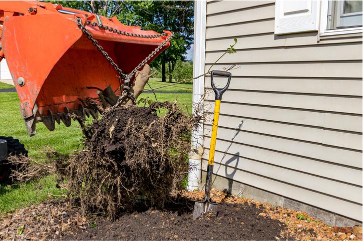 tree maintenance orange county