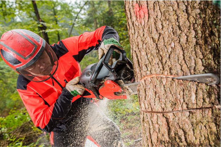 tree removal orange county
